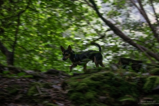 Rupert the dog explores the woodland